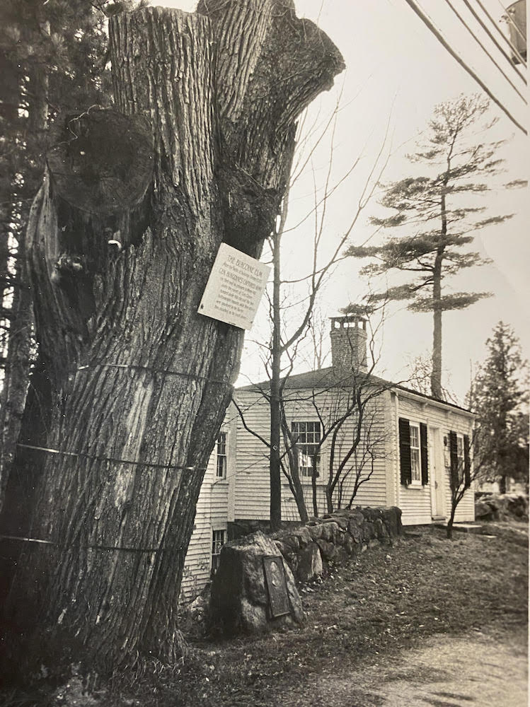 trunk of the elm, placard still hanging on it, in front of Fiske Law Office